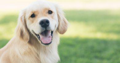 Best animal reiki course tutorial class certification training online