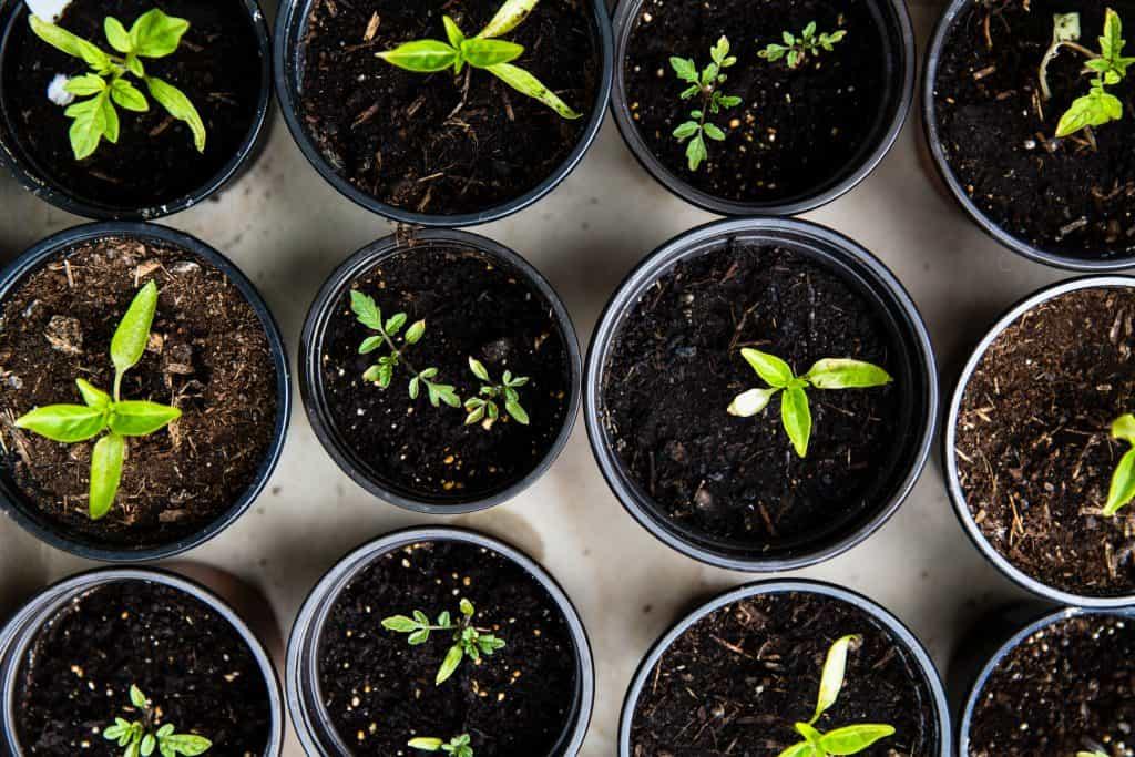 Best gardening course tutorial class certification training online