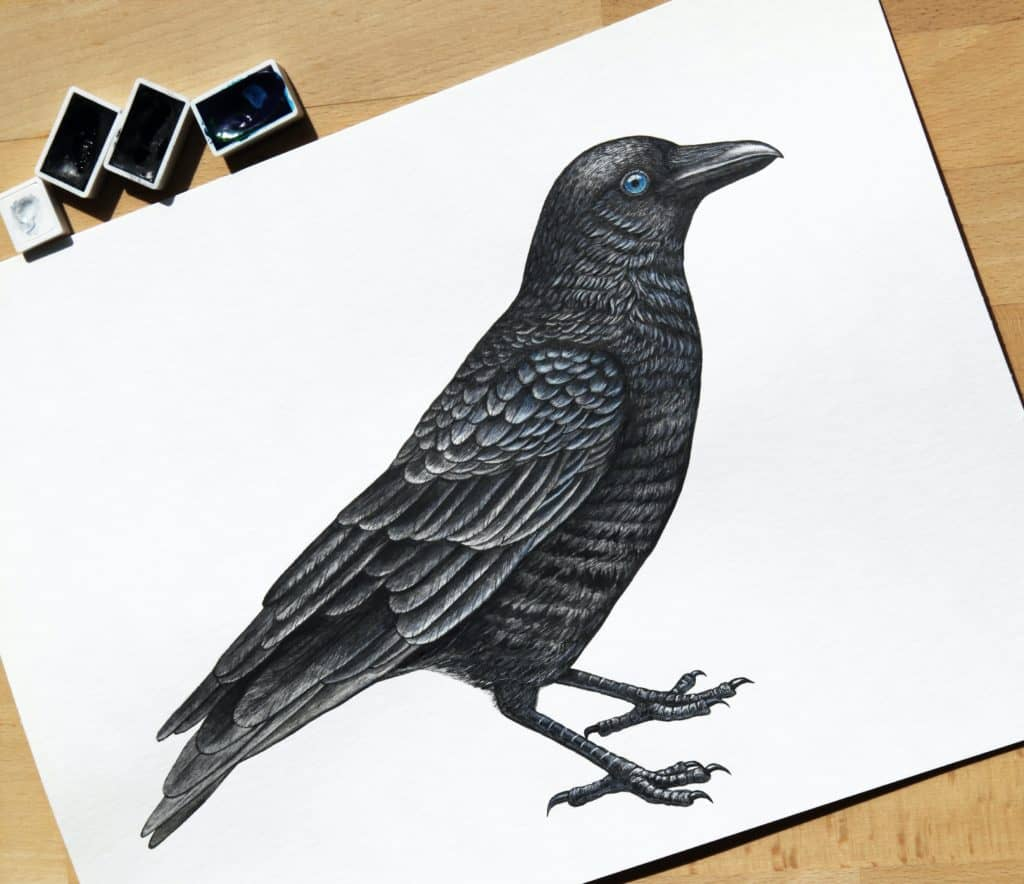Best Bird Drawing course tutorial class certification training online