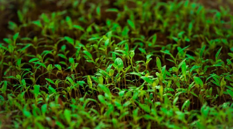 Best Plant Biology course tutorial class certification training online