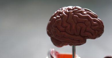 Best Brain course tutorial class certification training online