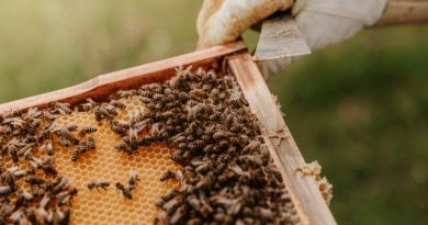 Best Beekeeping course tutorial class certification training online