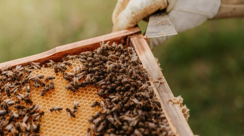 Best Beekeeping course tutorial class certification training online