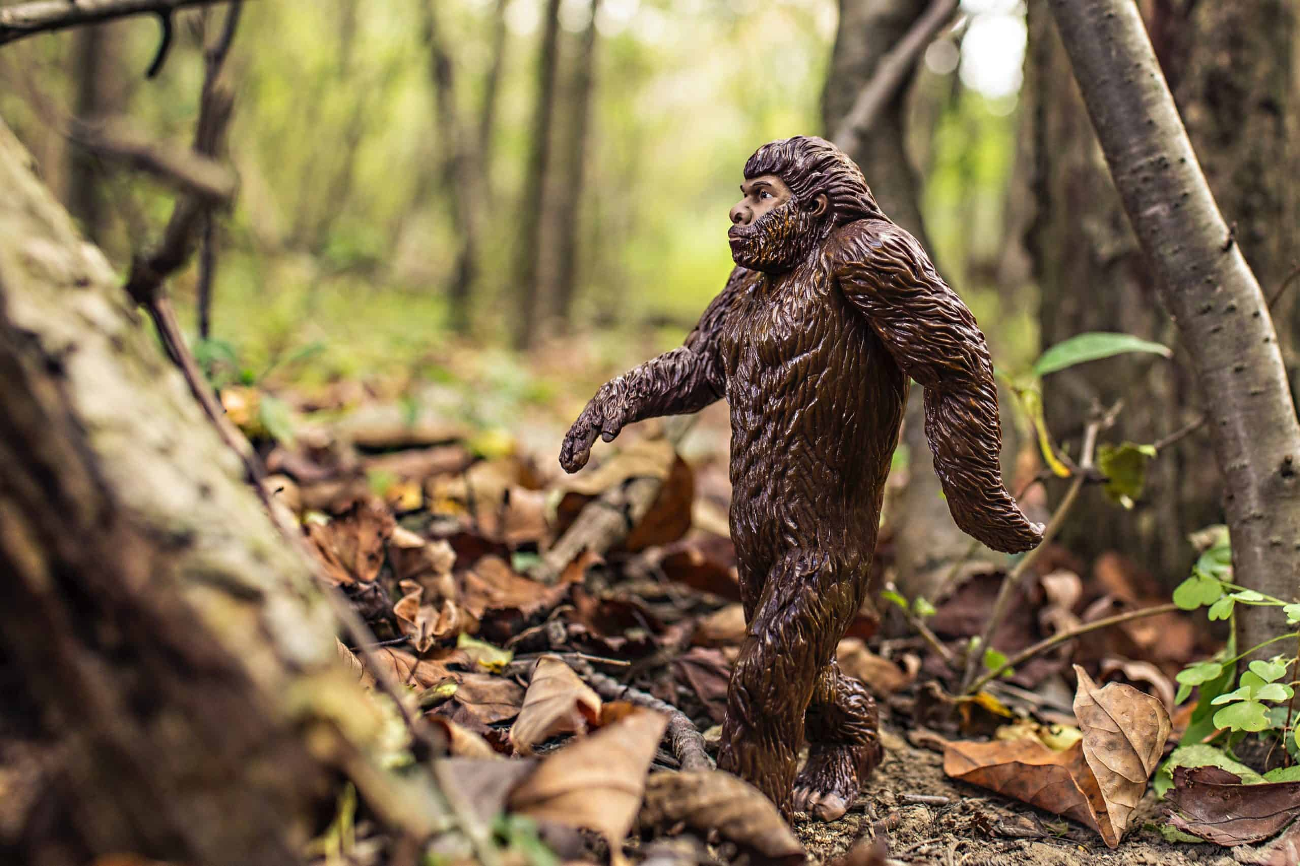 Best Cryptozoology course tutorial class certification training online